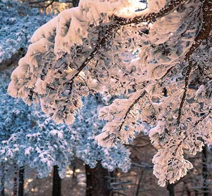 2016年冬大别山主峰白马尖的第一场雪